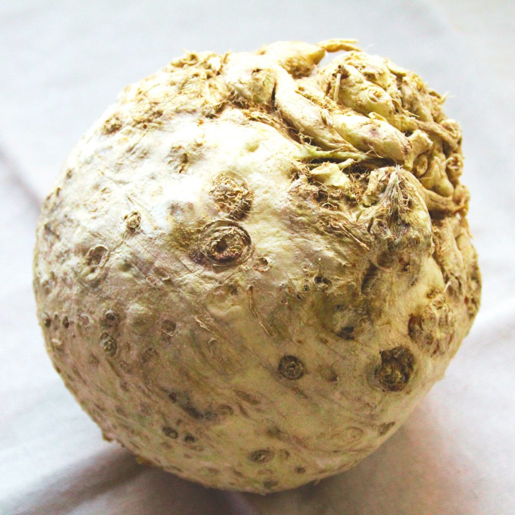 celery root, or celeriac, also called knob celery and turnip-rooted celery, on a tea towel